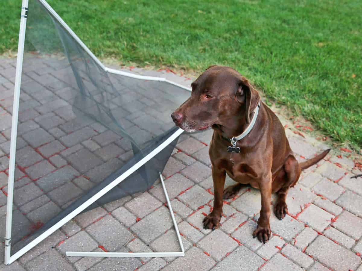 Window Screen Frame Replacement Colorado Springs Fort Carson